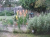 Dan's Garden 2011