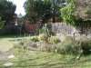Garden from back yard facing new plum and peach tree and blackberry vines on green fence