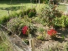 Garden April 2012