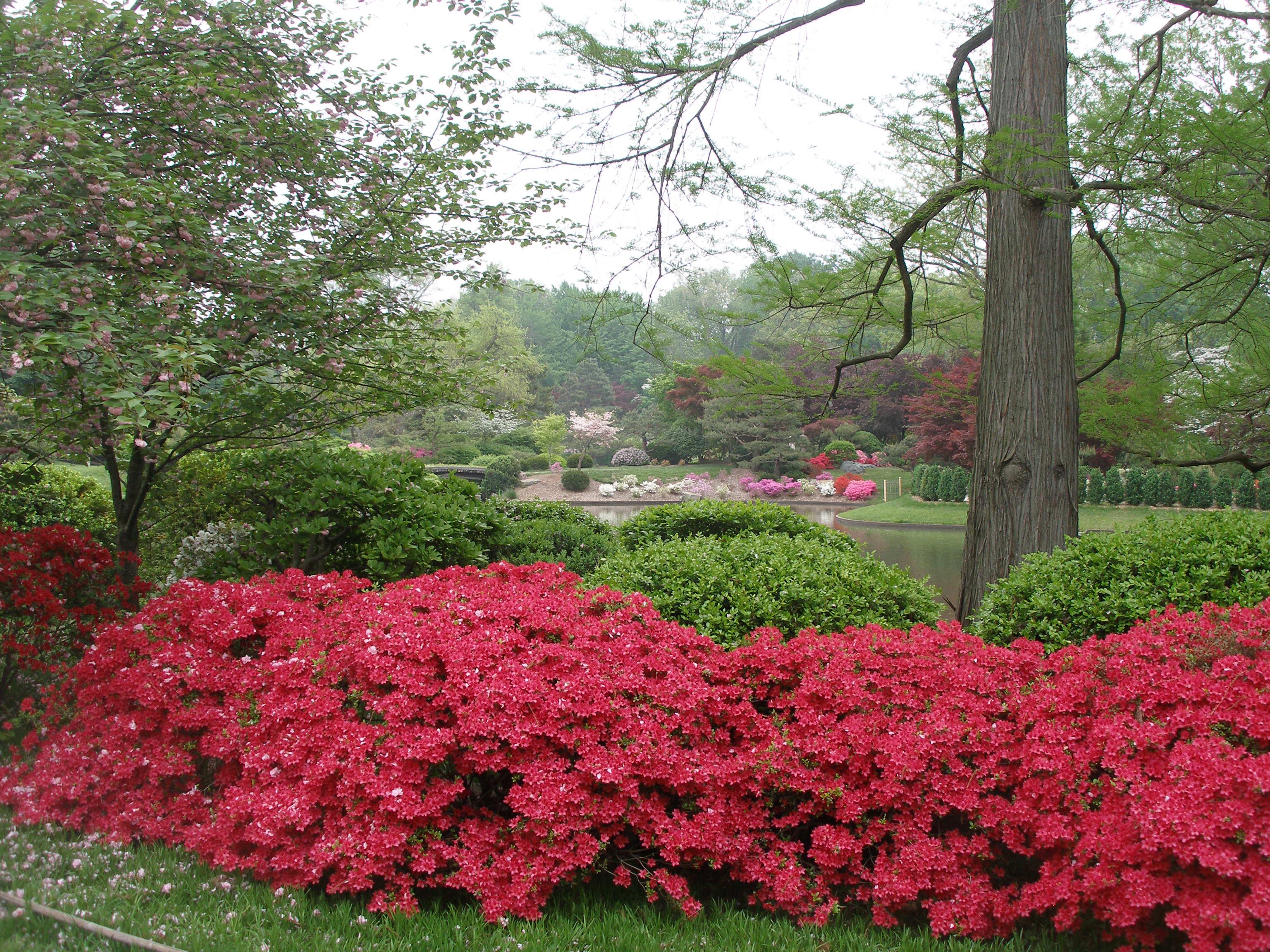Pictures Of Missouri Botanical Garden Daniel C Lavery