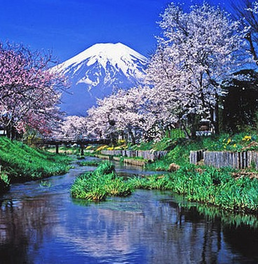 cropped-Fuji-refletion-and-cherry-trees.jpg