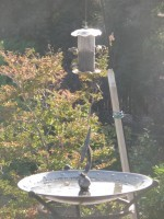 Squirrel sundial and water bath for birds